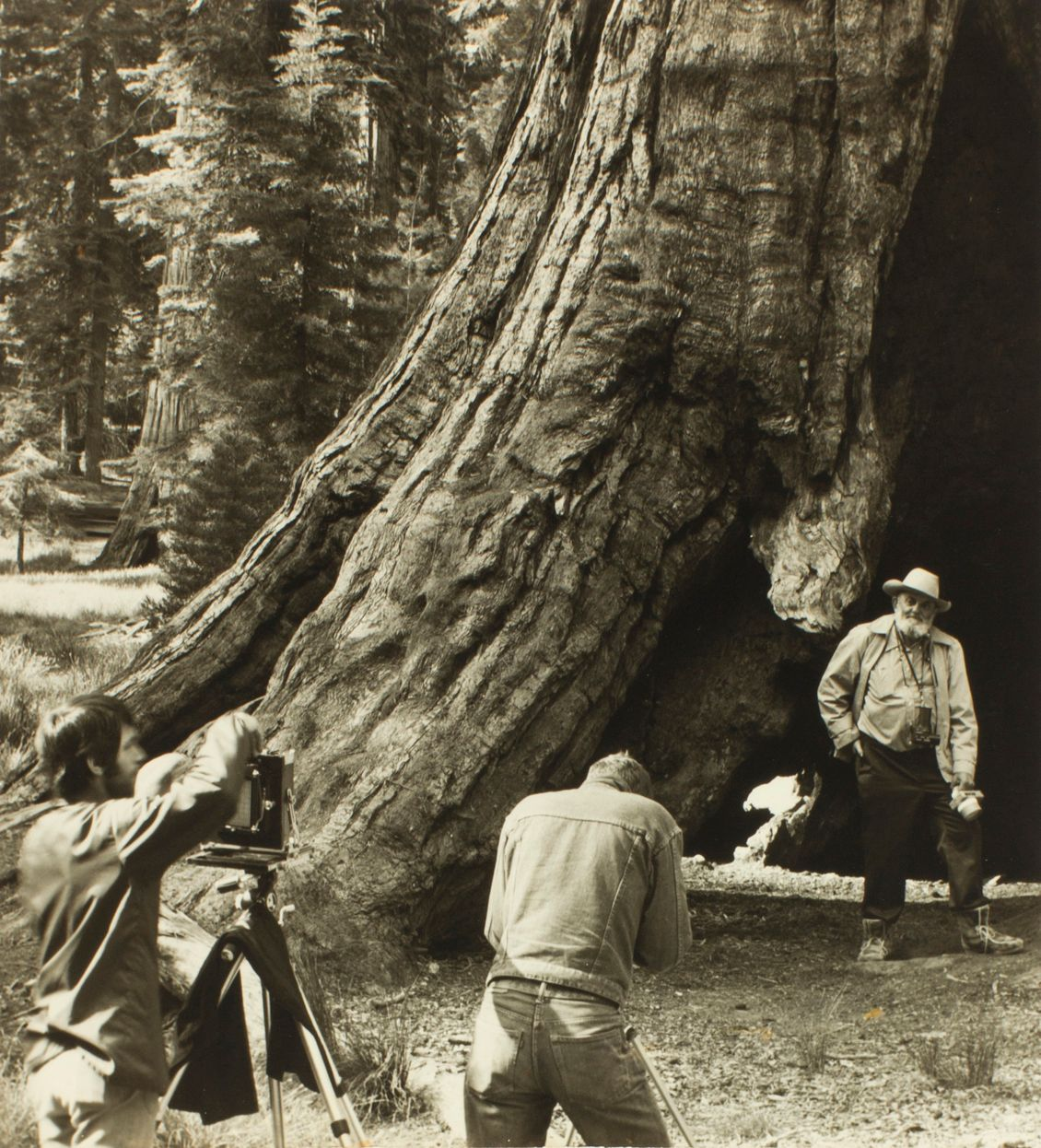 Ansel Adams, Marian Wood Kolisch. A photograph of Ansel Adams posing as two individuals take photographs of him in front of an enormous tree trunk. This portrait-oriented photo shows the figure of Ansel Adams standing at lower right and two photographers positioned at lower left and lower center. The photo is dominated by the huge trunk of a tree that dwarfs the figures. It sweeps from lower left across the photo and upwards to the upper right, displaying craggy, highly textured bark. At left in the background, evergreen trees in a forest setting are seen. Adams, an older white man with glasses and a white beard, stands at the base of the tree wearing a cowboy hat, light colored jacket and shirt with dark trousers and boots. He stands with his right hand in pocket and his other hand resting on his left knee. He has a camera on a strap around his neck and holds another in his left hand. At right, we see two photographers; the one at far left has short dark hair and a beard wearing a long sleeved top and pants. The figure is adjusting a camera on a tripod. At lower center, another photographer is seen from the back wearing a jean jacket and jeans, seemingly bent over a camera and tripod.