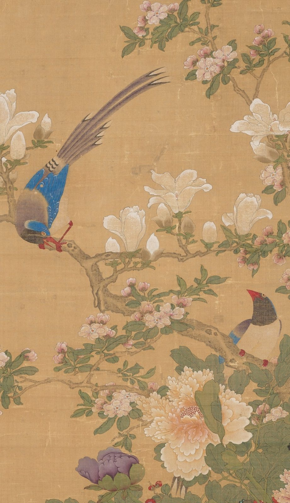 Image description: Birds and Flowers (detail), Sun Yi, hanging scroll; ink and color on silk, painting: 48 1/2 x 27 3/4 inches; mounting; 92 1/2 x 34 inches. Detail of scroll depicting two birds perched on flowering branches. A brown bark covered branch bisects the work from upper left slanting down the lower right. A male bird grips the branch at left, grey plumed tail held high while it bows its blue capped head at its mate at lower right. Its wings are bright blue, body gray and beak, legs and feet a brilliant red. They perch among creamy white magnolia blossoms and buds, tiny pale pink crabapple blossoms and leafy greenery. A large peach magnolia blossom with its many layered, ruffled petals is at lower bottom next to a violet peony bud. The scene is set against a khaki background.